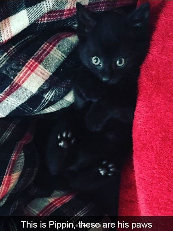 cat meme - Cat - This is Pippin, these are his paws