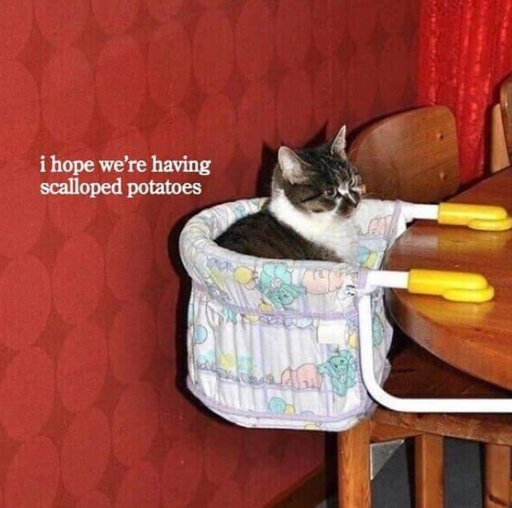 cat meme - Cat - i hope we're having scalloped potatoes