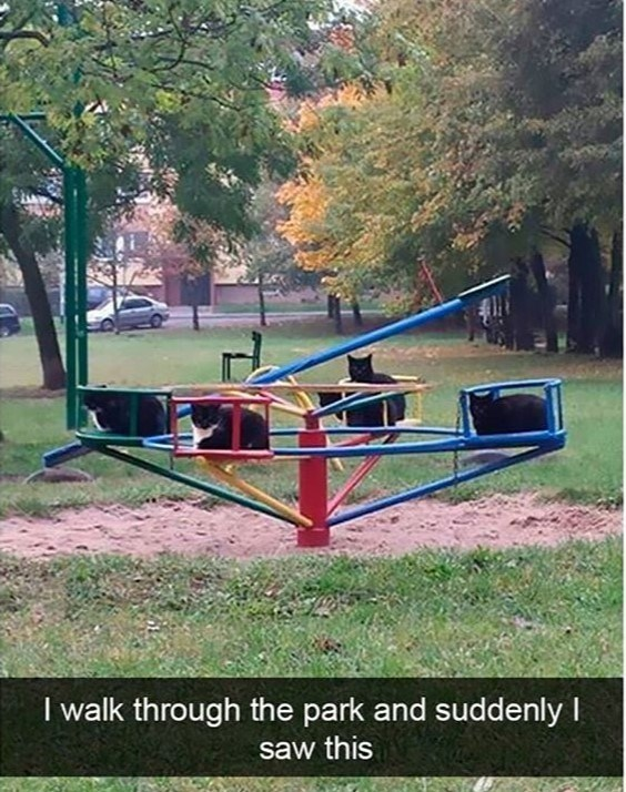 cat meme - Playground - I walk through the park and suddenly I saw this