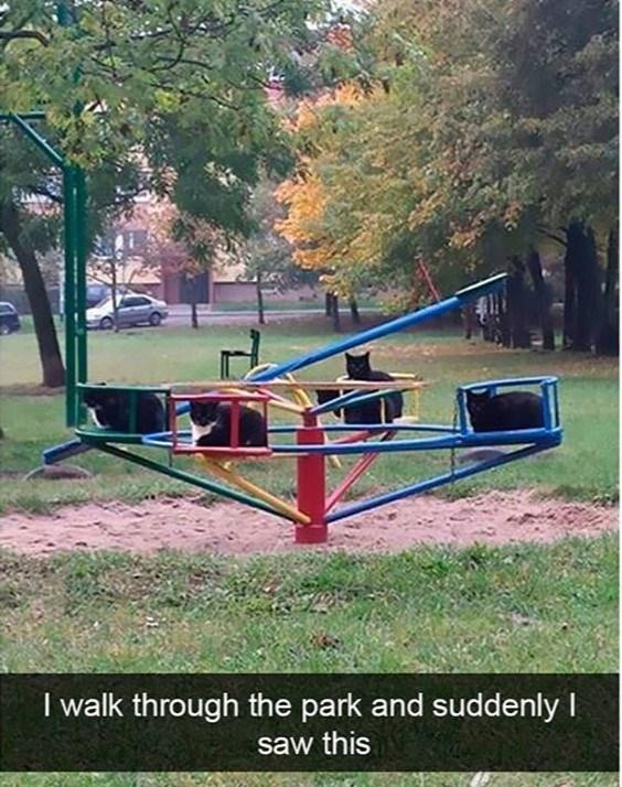 cat meme - Playground - I walk through the park and suddenly I saw this