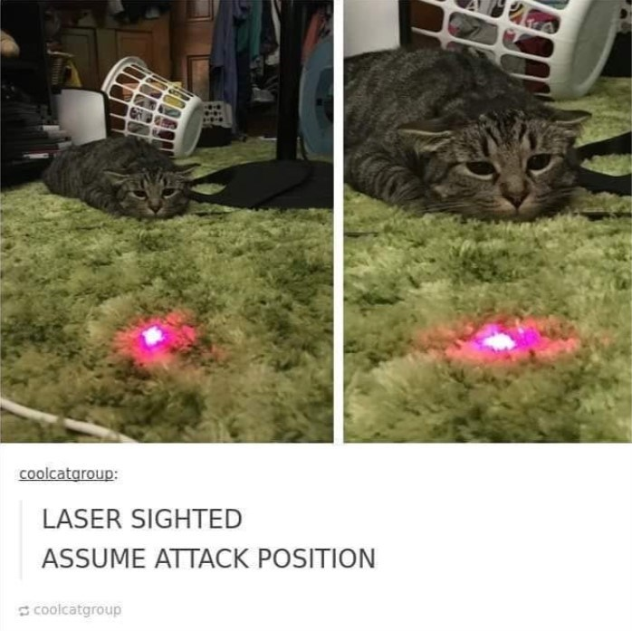 cat meme - Cat - Coolcataroup: LASER SIGHTED ASSUME ATTACK POSITION coolcatgroup