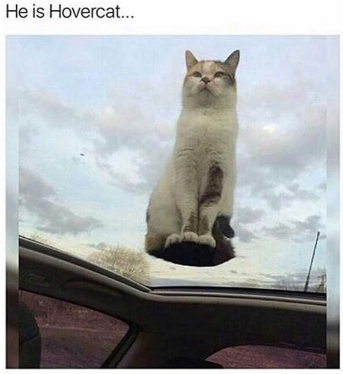 cat meme - Cat - He is Hovercat...