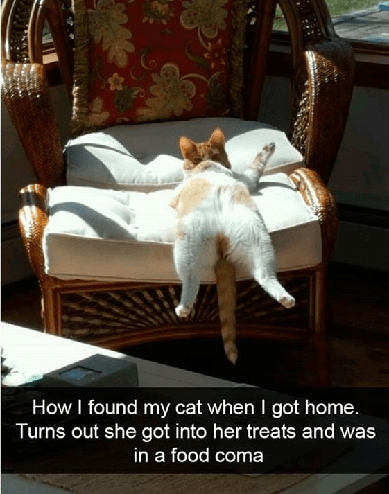 cat meme - Furniture - How I found my cat when I got home. Turns out she got into her treats and was in a food coma
