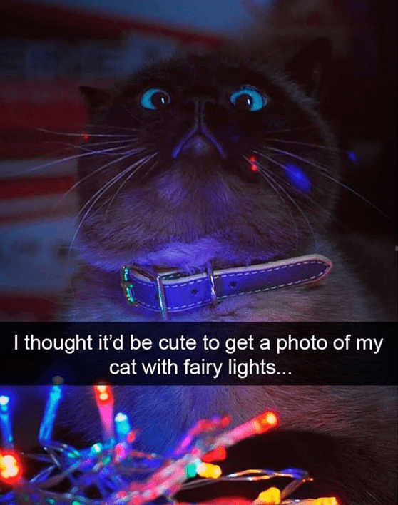 cat meme - Cat - I thought it'd be cute to get a photo of my cat with fairy lights...