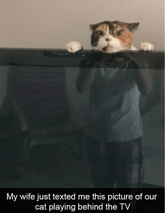 cat meme - Cat - My wife just texted me this picture of our cat playing behind the TV