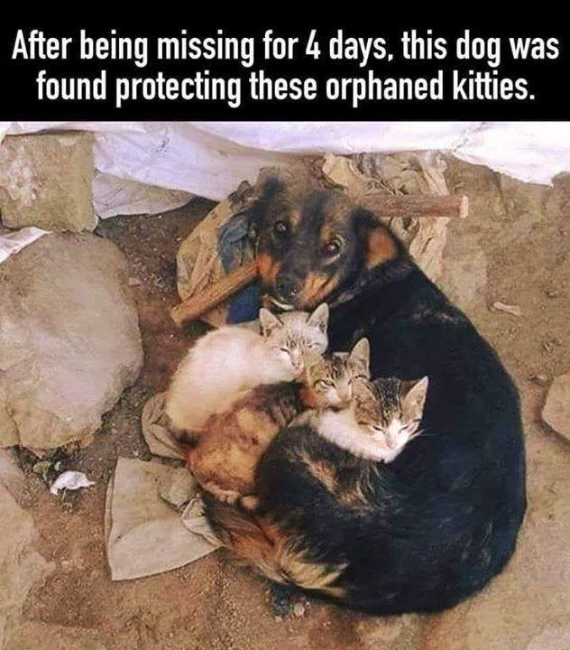 wholesome animal memes - 9321366016