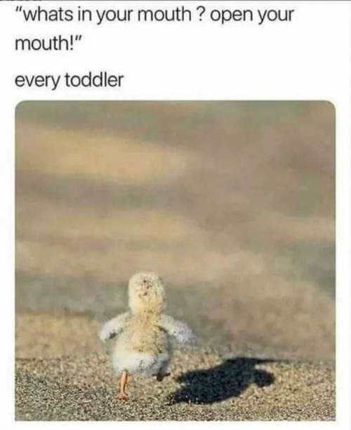 funny animal memes - 9321373952