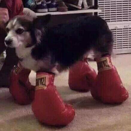 blessed image - Dog