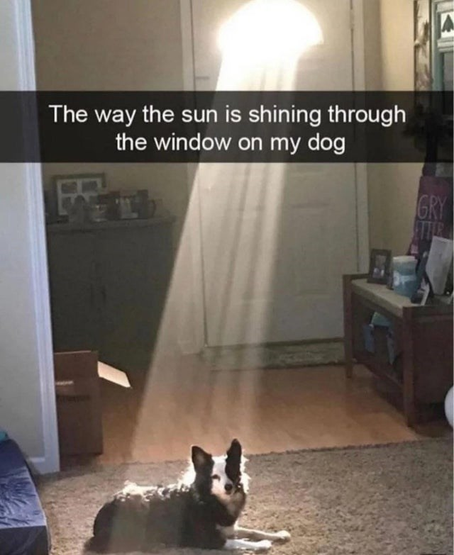 blessed image - Pembroke welsh corgi - The way the sun is shining through the window on my dog GRY