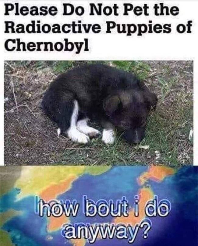 chernobyl meme - Dog - Please Do Not Pet the Radioactive Puppies of Chernobyl how bouti do anyway?