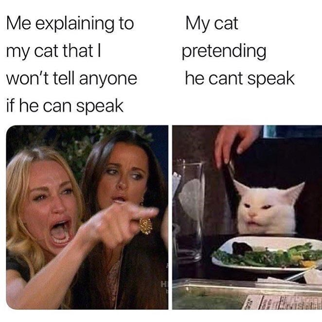 Meme - Facial expression - Me explaining to My cat pretending he cant speak my cat that I won't tell anyone if he can speak