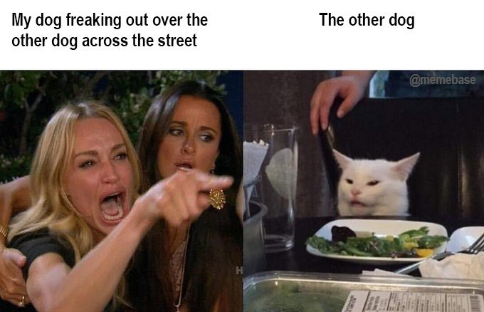 Meme - Cat - My dog freaking out over the other dog across the street The other dog @memebase