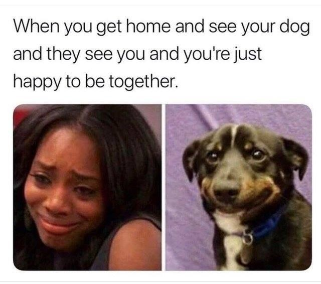 Facial expression - When you get home and see your dog and they see you and you're just happy to be together.