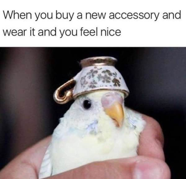 sily shitpost - Cockatiel - When you buy a new accessory and wear it and you feel nice