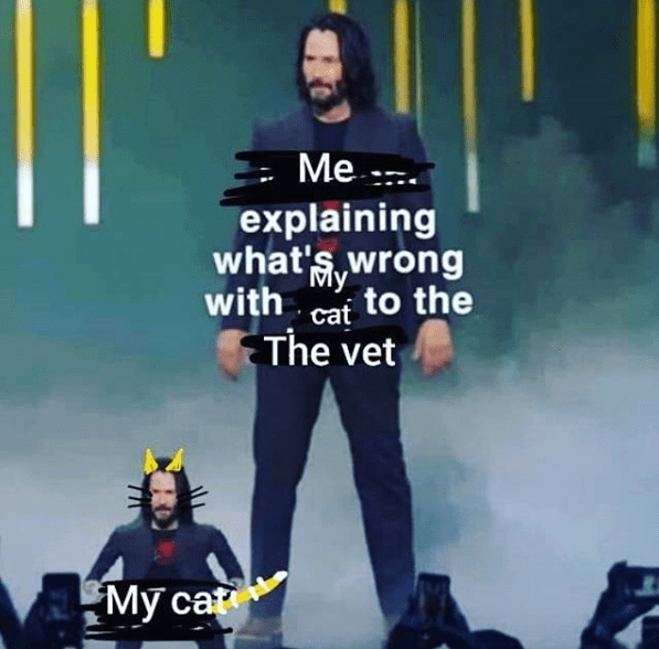 Funny mini keanu reeves meme about taking your cat to the vet.