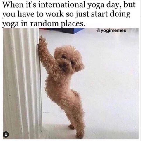 Meme - Dog - When it's international yoga day, but you have to work so just start doing yoga in random places. @yogimemes