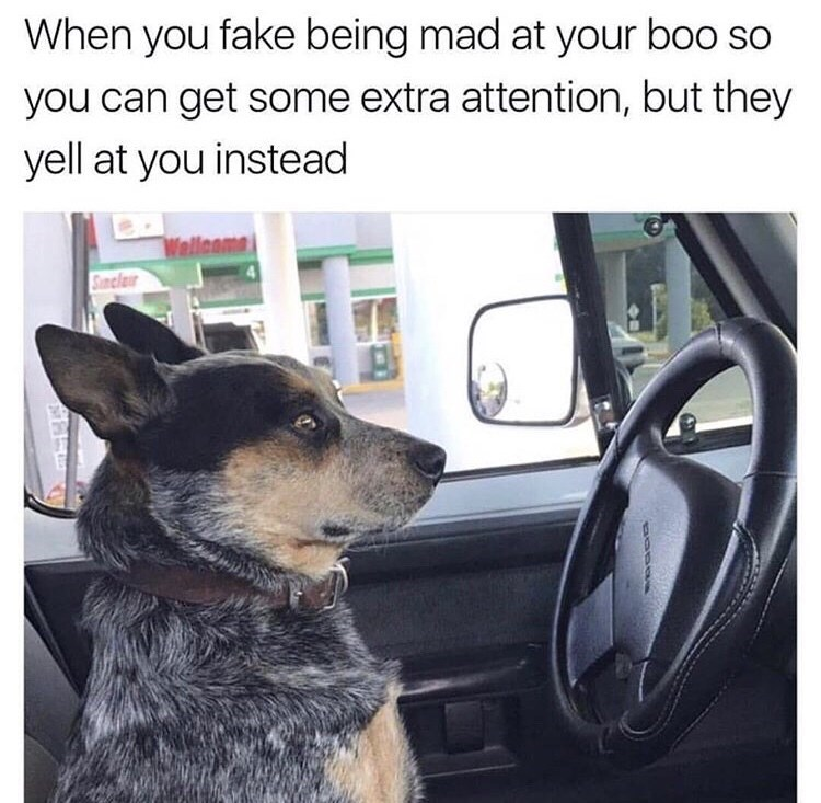 Meme - Dog - When you fake being mad at your boo so you can get some extra attention, but they yell at you instead Wellcome Suncla