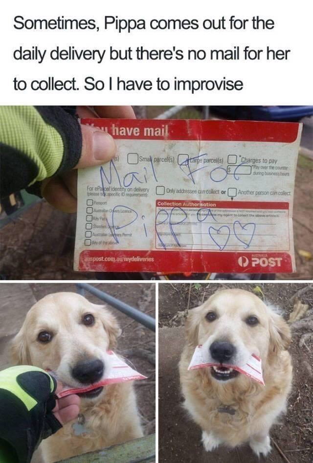 Meme - Dog - Sometimes, Pippa comes out for the daily delivery but there's no mail for her to collect. So I have to improvise have mail Smal parcels)targe parcel(s) Charges to pay Pay over the cou during businessbours For ePa cel identity on delivery please tpecfic D requremet Another person can collect Only addressee cancollect or Passpot Collection Authorisation Aumalan Ders Lcmc no os ow.mooent to coleet the aber oct ct Australan ers Pi Anof theabov AUSTRAIA POST auspost.com.aunydeliveries
