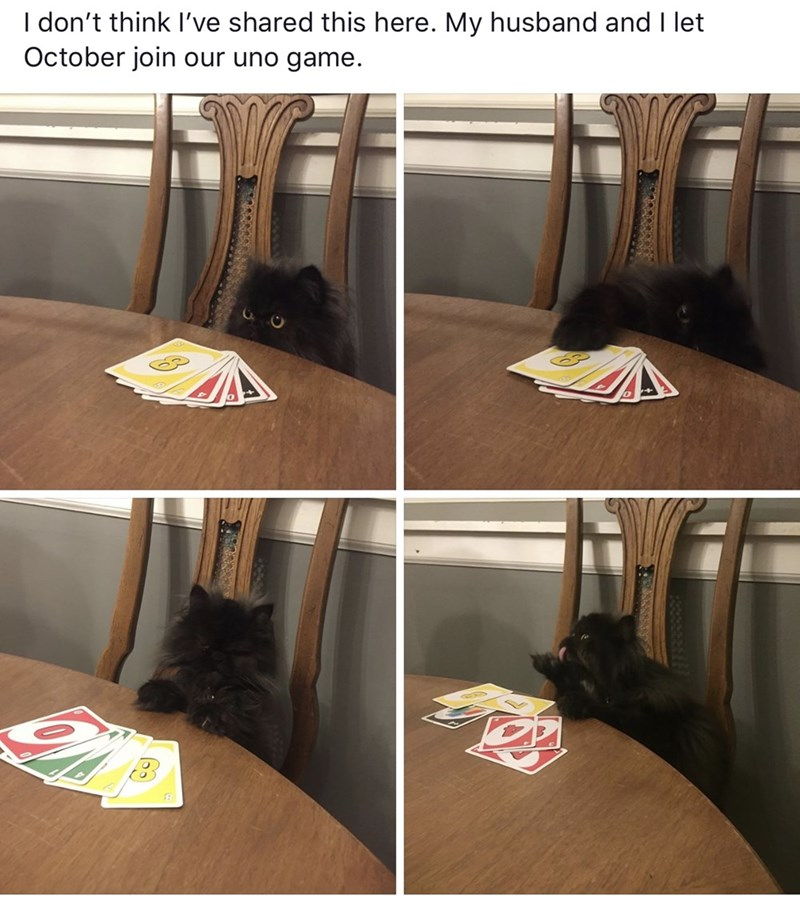 Meme - Furniture - I don't think I've shared this here. My husband and I let October join our uno game.