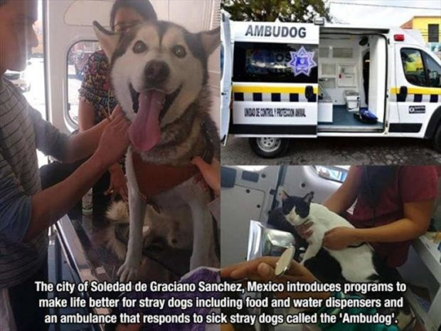 wholesome meme - Dog - AMBUDOG ANDA E The city of Soledad de Graciano Sanchez, Mexico introduces programs to make life better for stray dogs including food and water dispensers and an ambulance that responds to sick stray dogs called the Ambudog'.