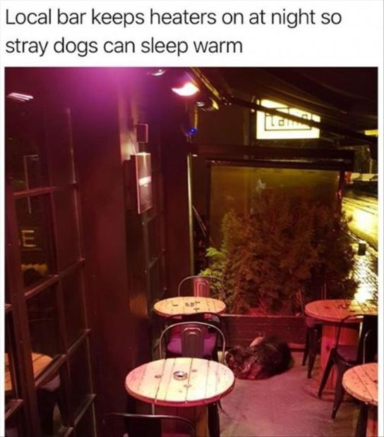 wholesome meme - Room - Local bar keeps heaters on at night so stray dogs can sleep warm Lan