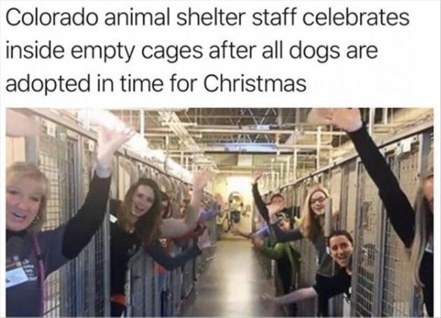 wholesome meme - People - Colorado animal shelter staff celebrates inside empty cages after all dogs are adopted in time for Christmas