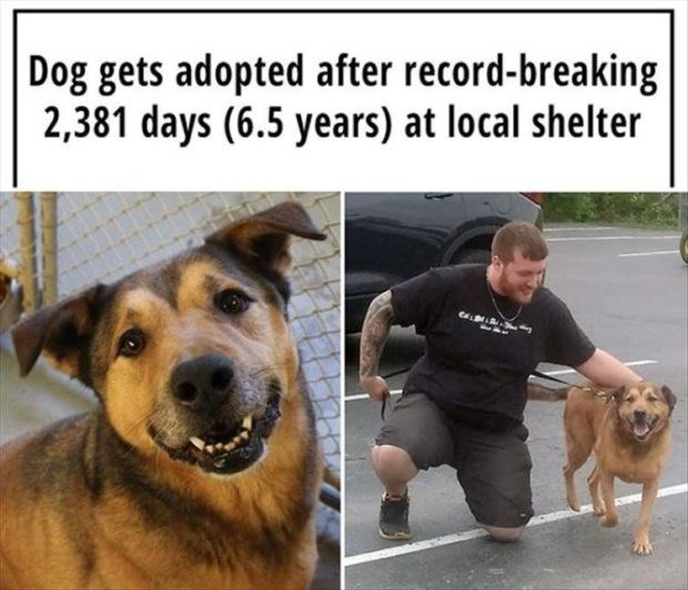 wholesome meme - Dog - Dog gets adopted after record-breaking 2,381 days (6.5 years) at local shelter