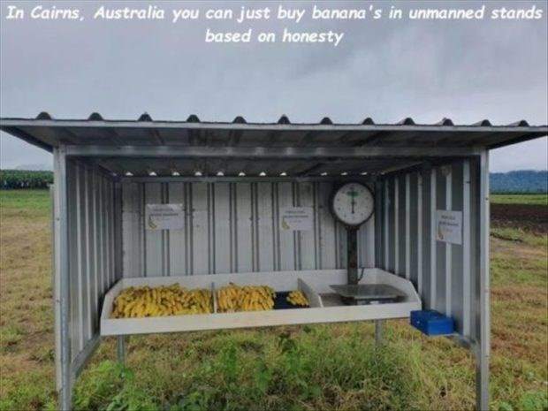 wholesome meme - Shed - In Cairns, Australia you can just buy banana's in unmanned stands based on honesty