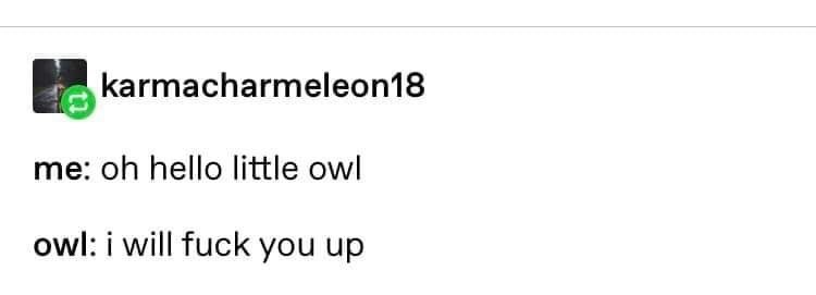 owl warning - Text - karmacharmeleon18 me: oh hello little owl owl: i will fuck you up