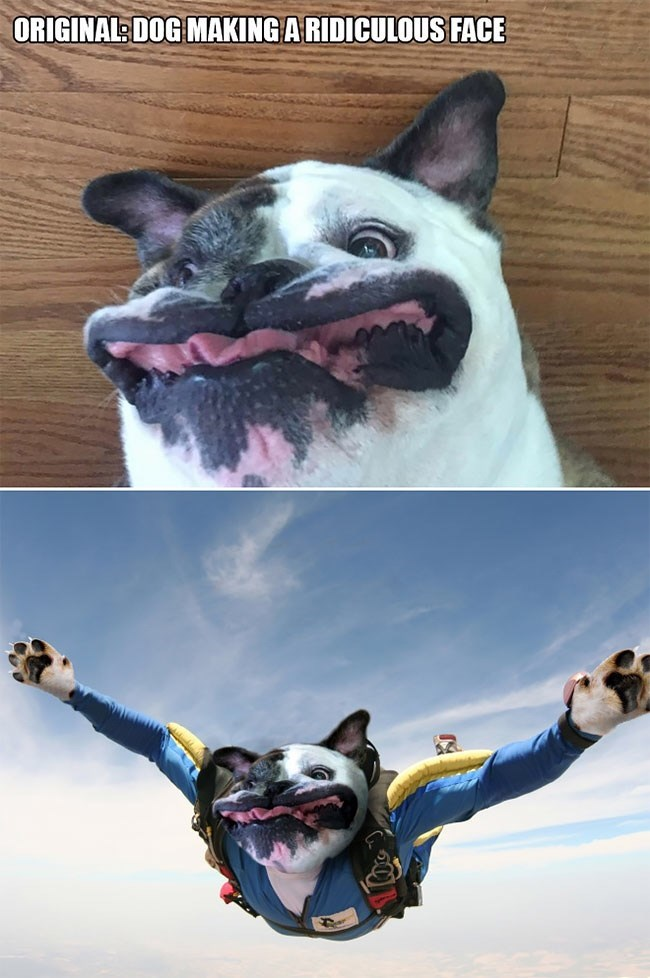Meme - Canidae - ORIGINAL DOG MAKING ARIDICULOUS FACE