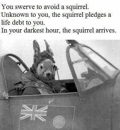 Meme - Motor vehicle - You swerve to avoid a squirrel. Unknown to you, the squirrel pledges a life debt to you In your darkest hour, the squirrel arrives K