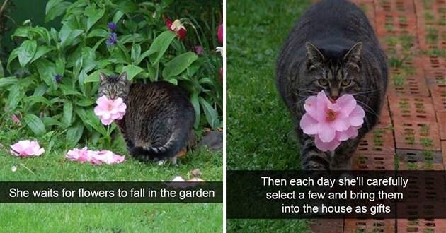cute funny cat snaps