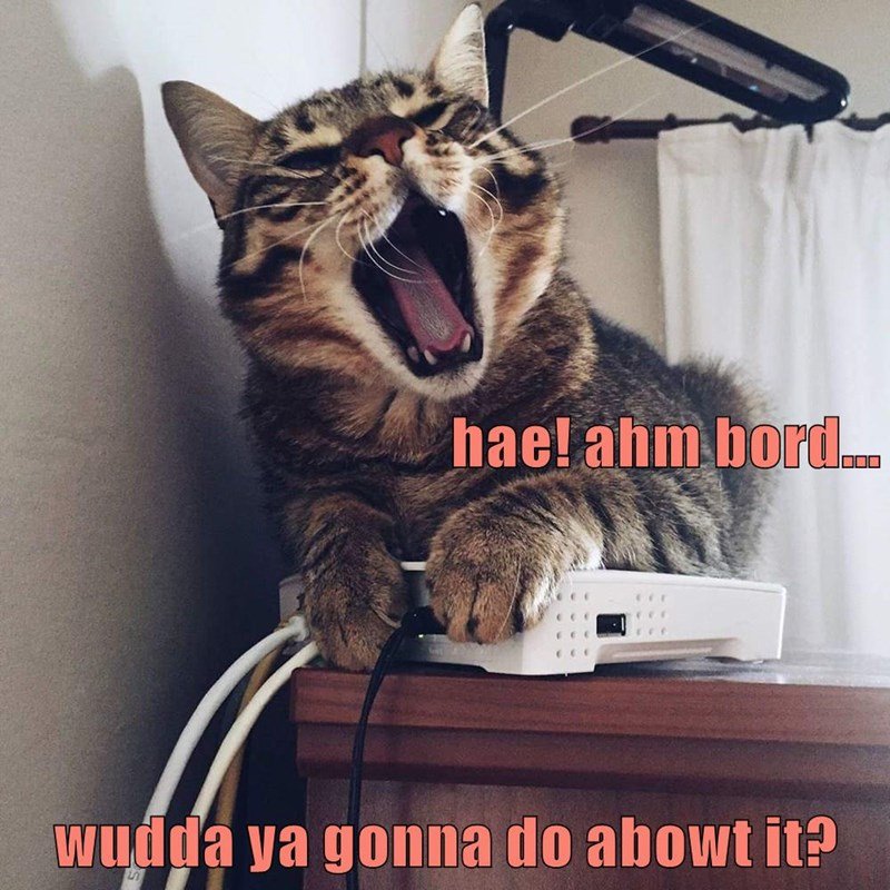 boredom funny cats bored cat memes - 9322411520
