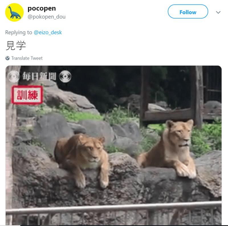 Wildlife - pocopen @pokopen_dou Follow Replying to @eizo_desk Translate Tweet