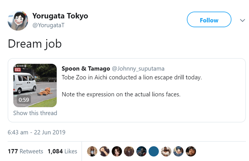 Text - Yorugata Tokyo Follow @YorugataT Dream job Spoon & Tamago @Johnny_suputama Tobe Zoo in Aichi conducted a lion escape drill today. Note the expression on the actual lions faces. 0:59 Show this thread 6:43 am - 22 Jun 2019 177 Retweets 1,084 Likes