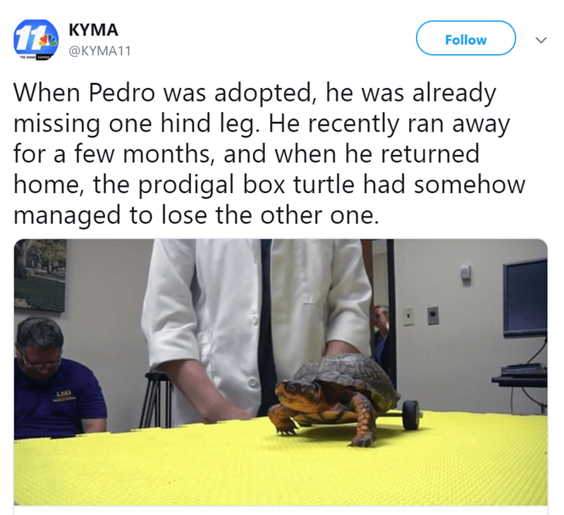 Text - 11 KYMA Follow @KYMA11 v news comes When Pedro was adopted, he was already missing one hind leg. He recently ran away for a few months, and when he returned home, the prodigal box turtle had somehow managed to lose the other one. LGU