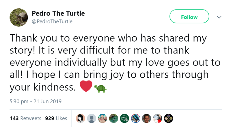 Text - Pedro The Turtle Follow @PedroTheTurtle Thank you to everyone who has shared my story! It is very difficult for me to thank everyone individually but my love goes out to all! I hope I can bring joy to others through your kindness. 5:30 pm 21 Jun 2019 143 Retweets 929 Likes