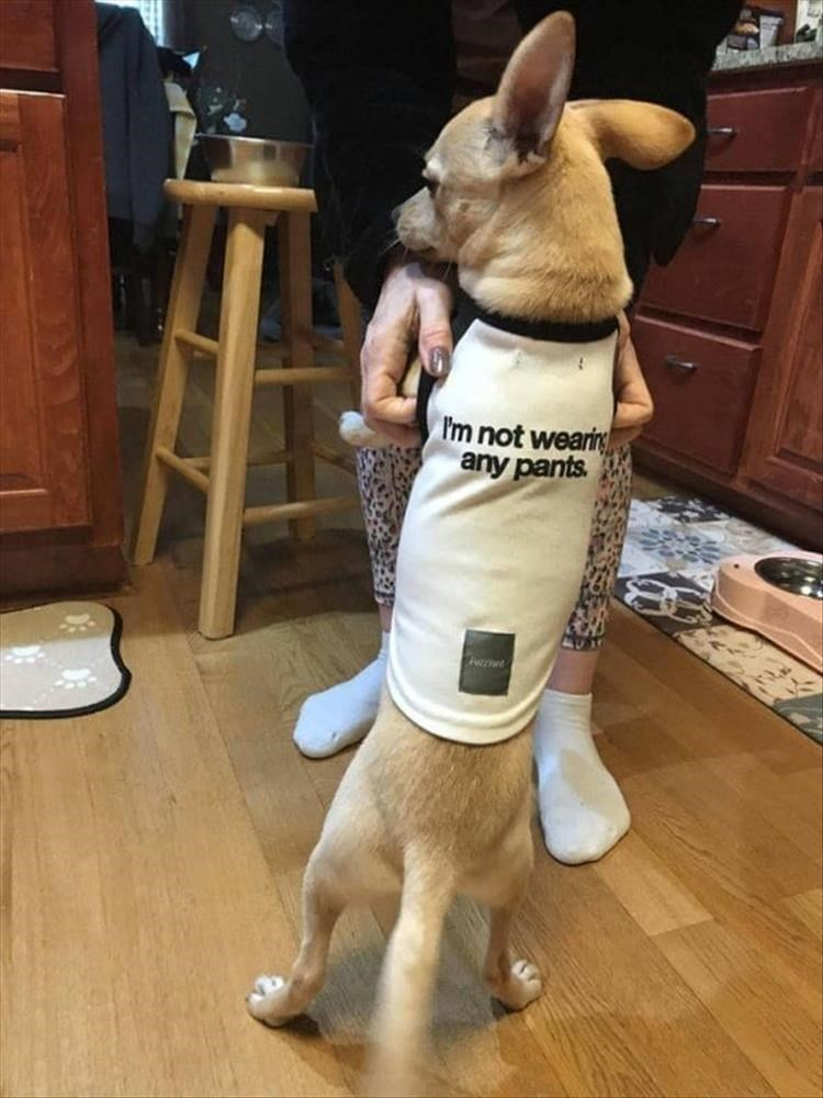 Dog clothes - Im not wearin any pants Fret