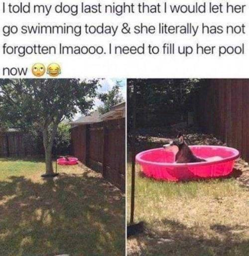 Backyard - I told my dog last night that I would let her go swimming today & she literally has not forgotten Imaoo0. I need to fill up her pool now
