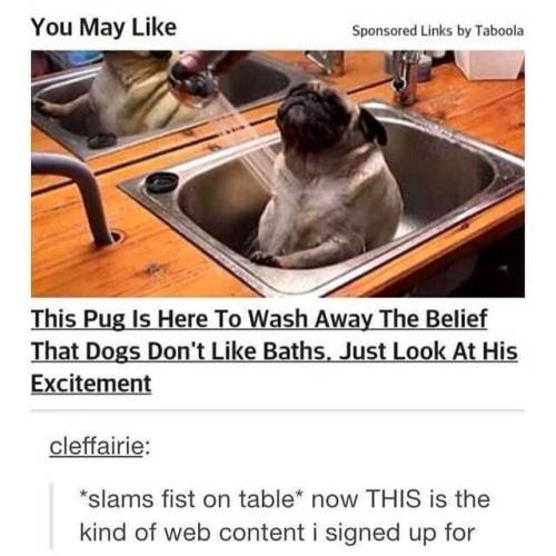 """Shih tzu - You May Like Sponsored Links by Taboola This Pug Is Here To Wash Away The Belief That Dogs Don't Like Baths, Just Look At His Excitement cleffairie: """"slams fist on table* now THIS is the kind of web content i signed up for"""