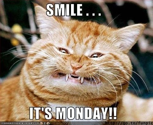 monday cat memes - Cat - SMILE... IT'S MONDAY!! http://go.to/funpic IGANHASCHEEZEURGER.COM