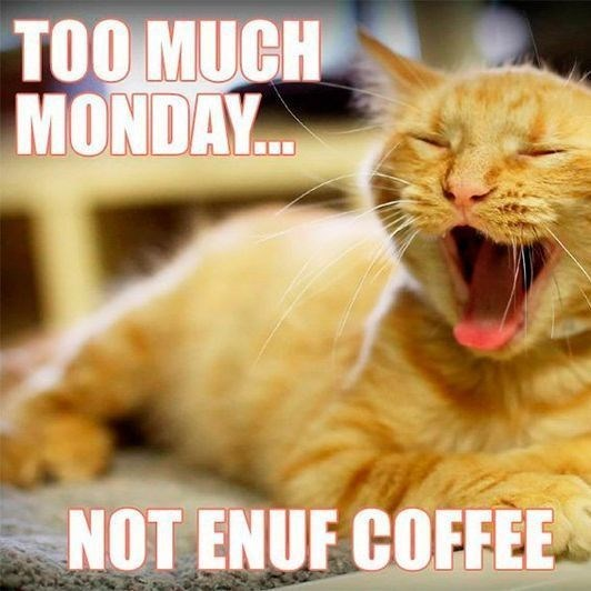 monday cat memes - Cat - TOO MUCH MONDAY.C. NOT ENUF COFFEE