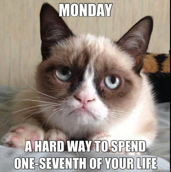 monday cat memes - Cat - MONDAY A HARD WAY TOSPEND ONE -SEVENTH OF YOUR LIFE CUICkmenOco