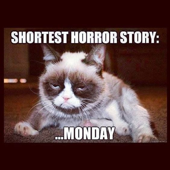 monday cat memes - Cat - SHORTEST HORROR STORY: MONDAY quickneme.c