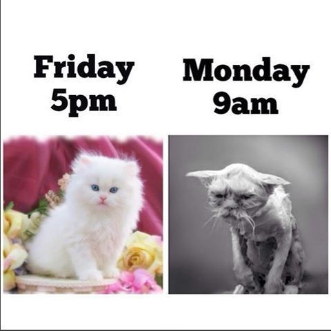 monday cat memes - Cat - Friday 5pm Monday 9am ая