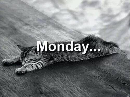 monday cat memes - Cat - Monday...