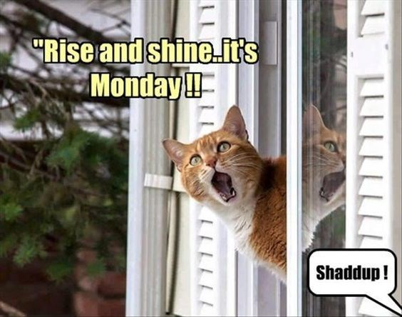 monday cat memes - Cat - Rise andshine.fts Monday!! | Shaddup! ULLL LLLLL