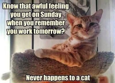 monday cat memes - Cat - Know that awful feeling you get on Sunday when you remember you work tomorrow? Never happens to a cat