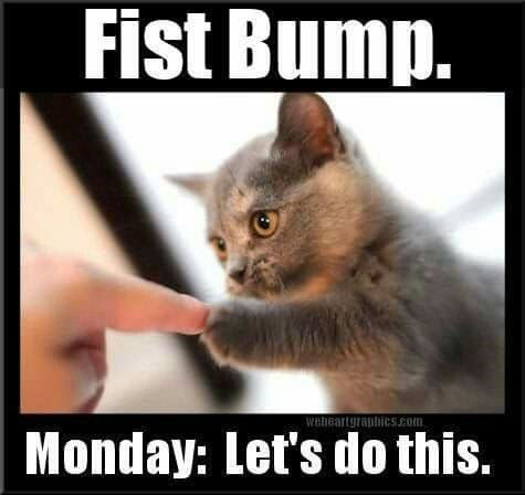monday cat memes - Photo caption - Fist Bump. weheartgraphicS.com Monday: Let's do this.