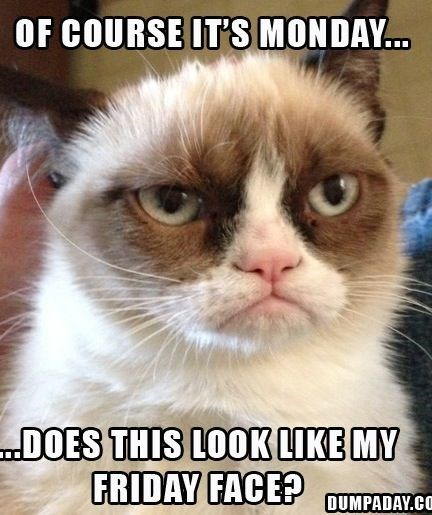 monday cat memes - Cat - OF COURSE IT'S MONDAY... .DOES THIS LOOK LIKE MY FRIDAY FACE? DUMPADAY.CO